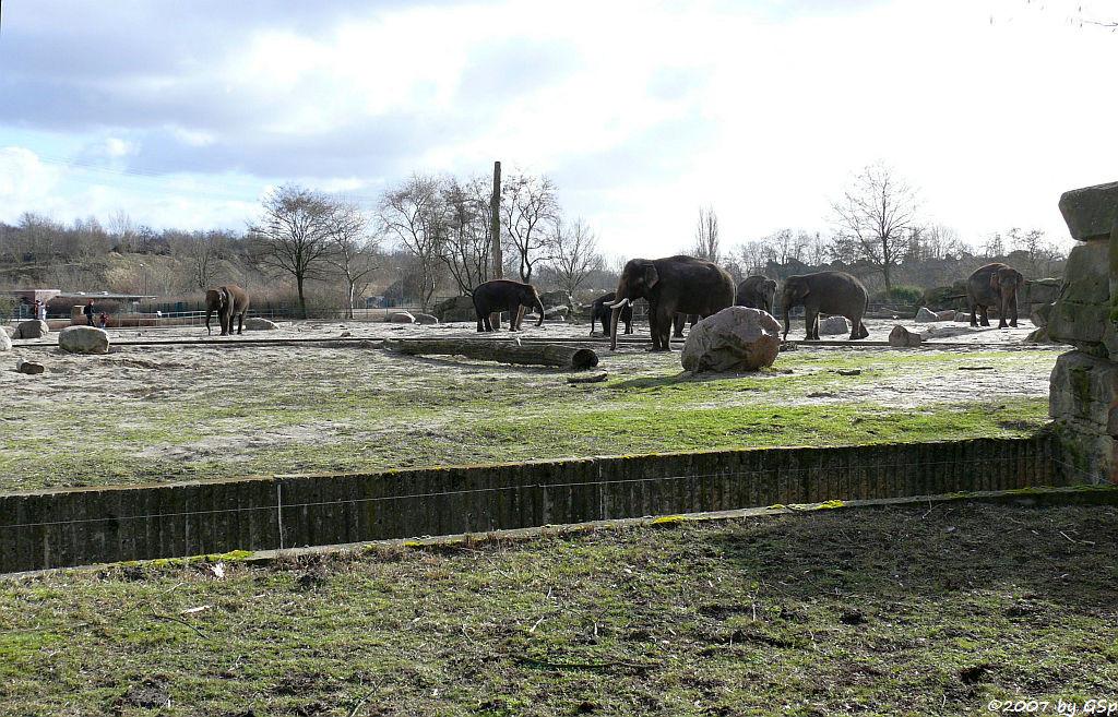 Asiatische Elefanten - 24 Fotos