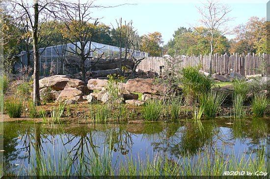 Neues Nashornhaus