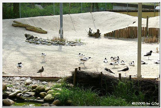 Watvogelanlage