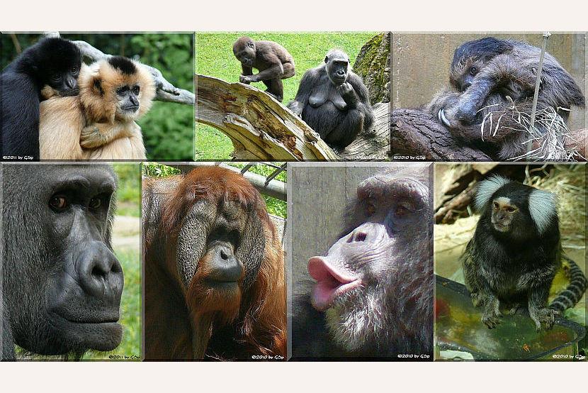 Gorillaberg - Fotos in separater Galerie