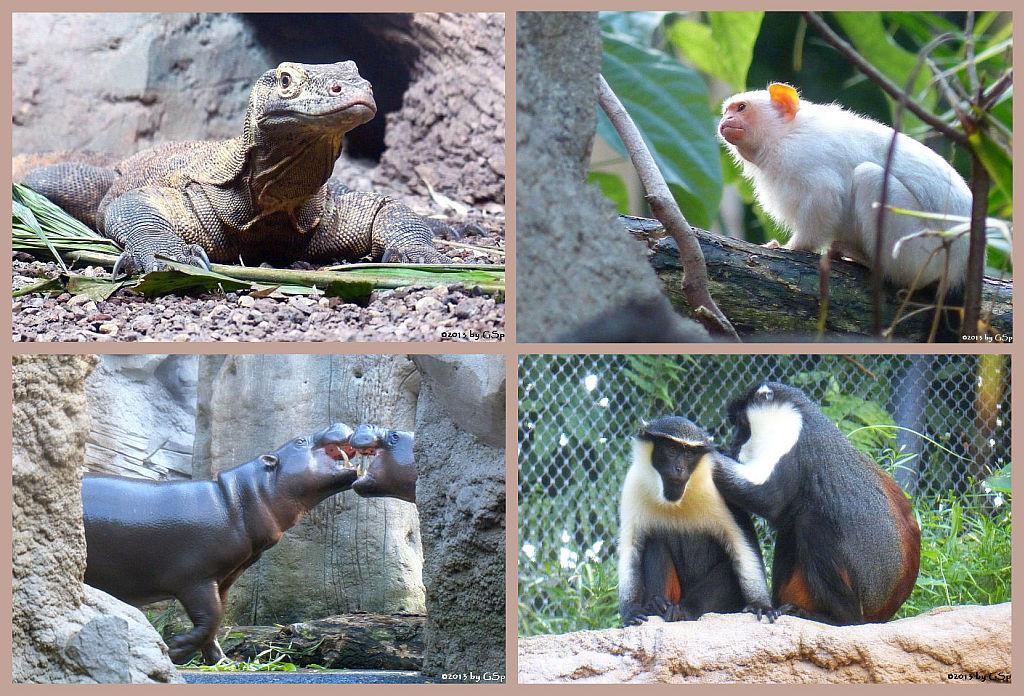 Gondwanaland - 50 Fotos