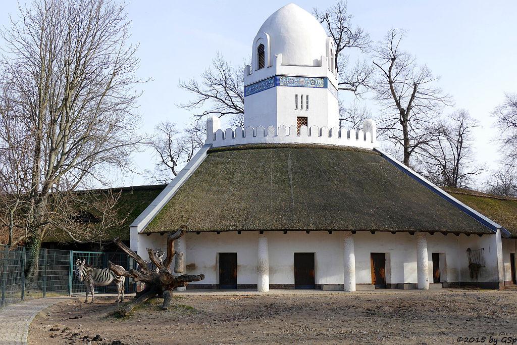 Persischer Turmstall, Grévy-Zebra