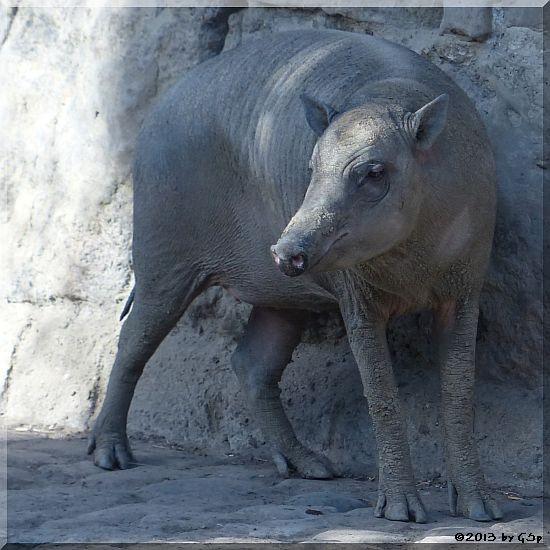Visaya-Pustelschwein