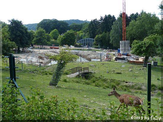 Mitteleuropäischer Rothirsch und Neubau Elefanten-Außenanlage