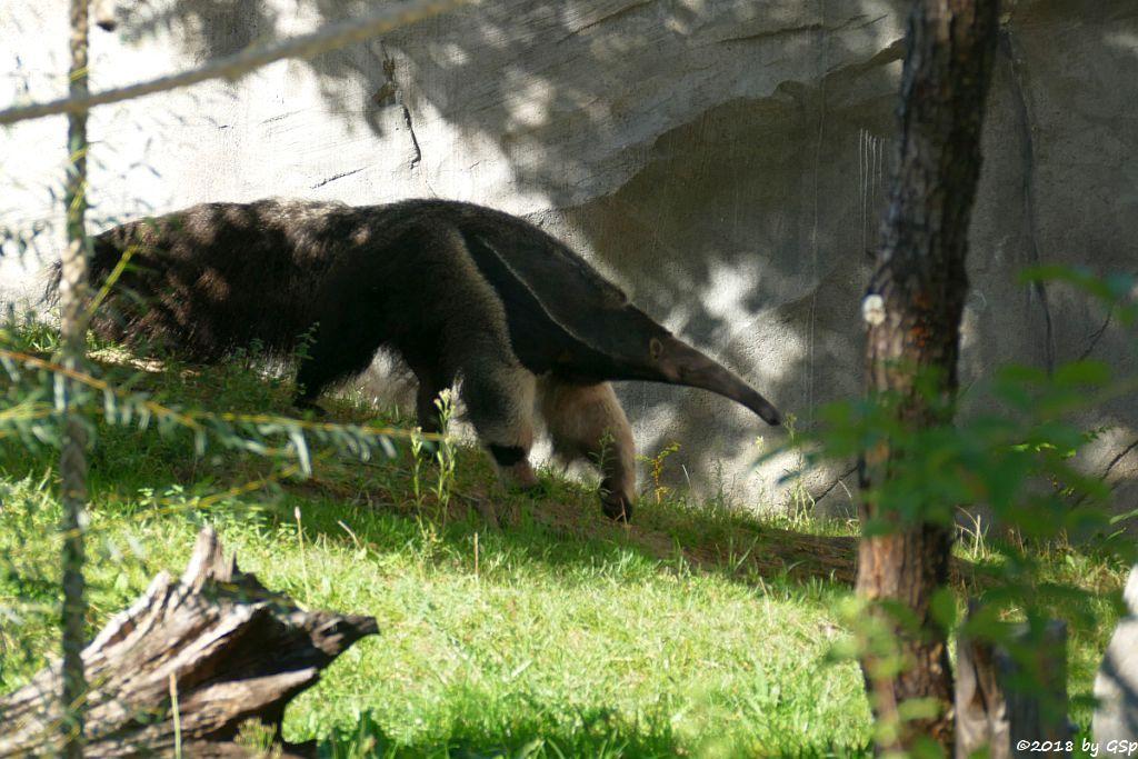 Großer Ameisenbär (Yurumi)