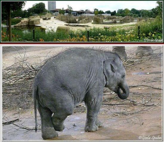 Elefantenpark 15.12.06 - 22 Fotos
