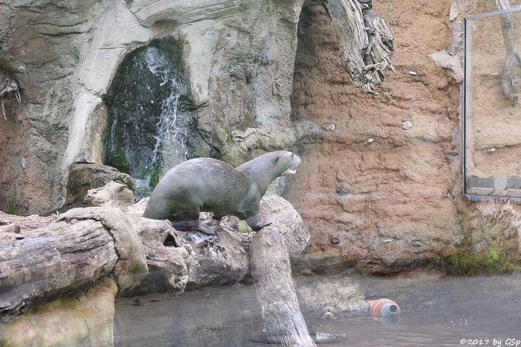Riesenotter