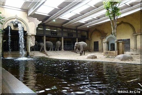 Elefanten 28.09.12 - 93 Fotos