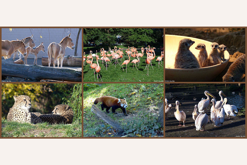Rundgang Teil 1 - 254 Fotos