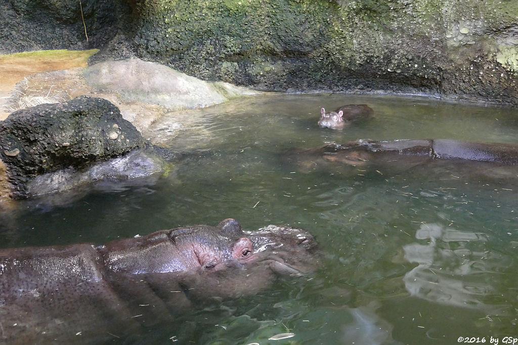 Flusspferd-Familie