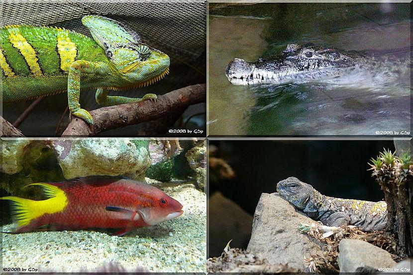 Aquarium-Terrarium - 78 Fotos