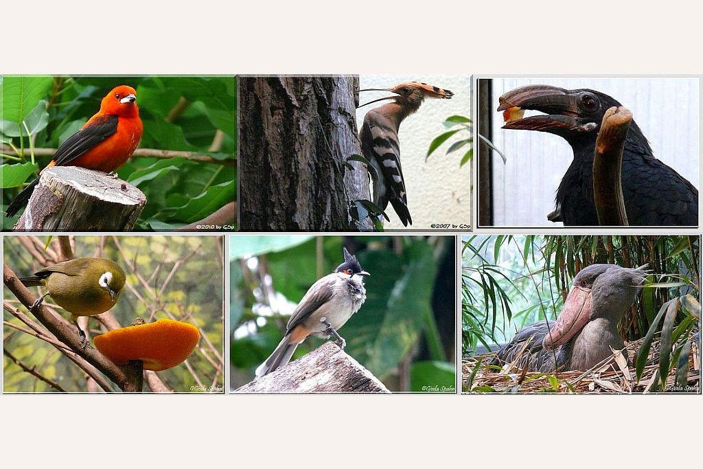 Vogelhallen - 93 Fotos
