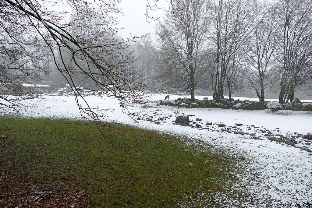 Lietschi-Wasserbock