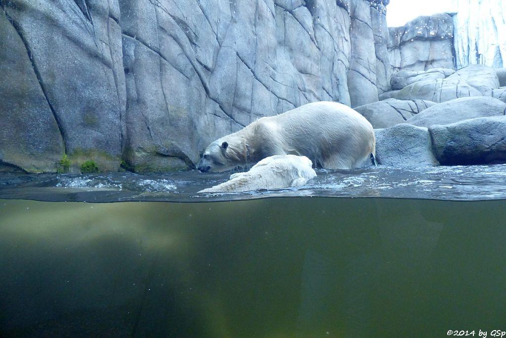 Eisbär BLIZZARD und VICTORIA