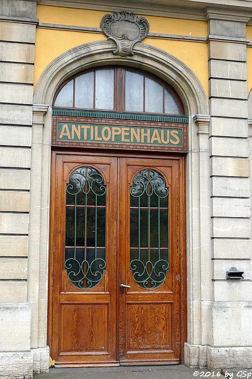 Antilopenhaus