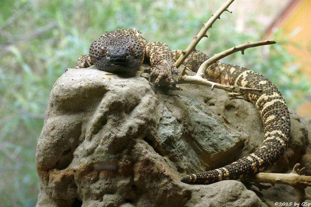 Scorpions-Krustenechse