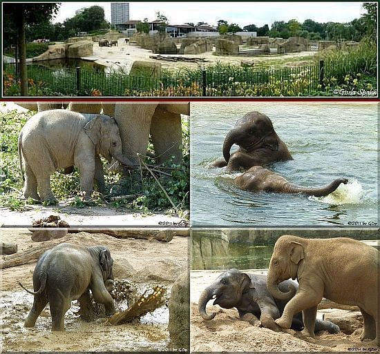 Elefantenpark 17. 06.11 - 119 Fotos