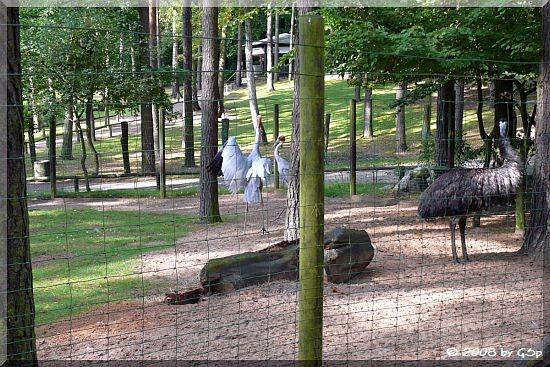 Saruskranich und Emu