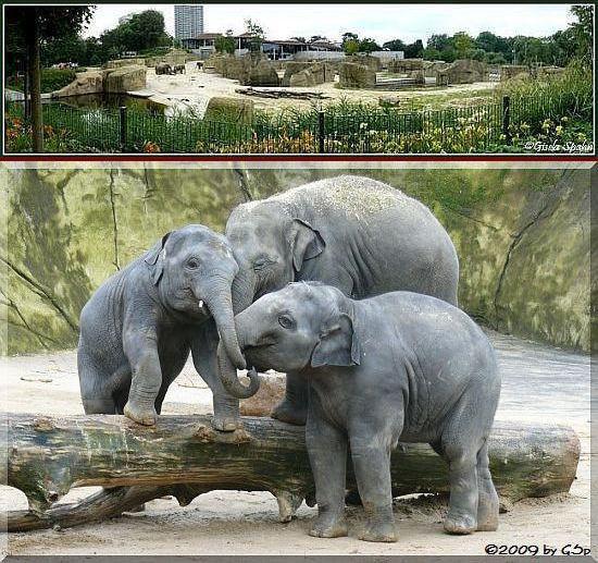 Elefantenpark 11.11.09 - 60 Fotos