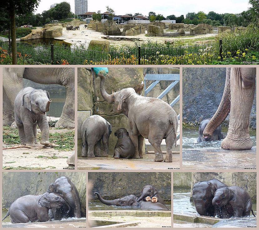Elefantenpark 29.11.12 - 162 Fotos