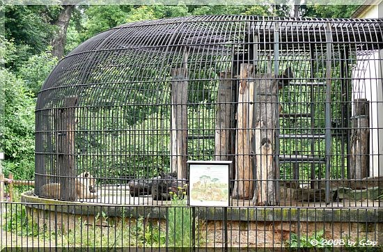 ....im historischen Löwen-Außenkäfig