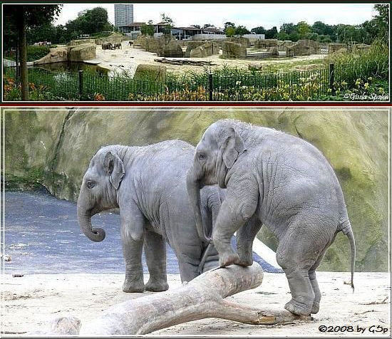 Elefantenpark 9.12.08 - 37 Fotos