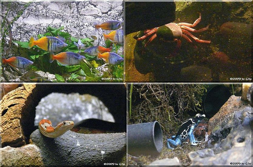Aquarium - 20 Fotos