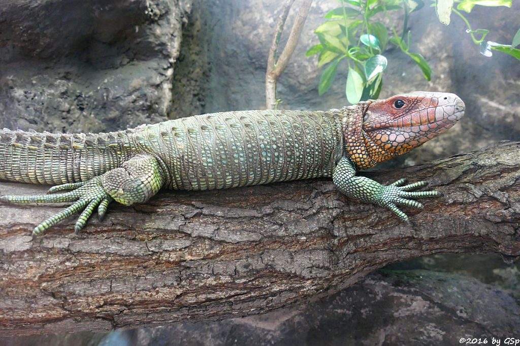 Krokodilteju (Panzerteju)