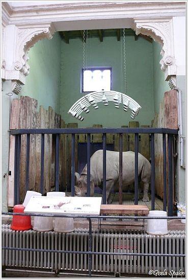 Spitzmaulnashorn im alten Elefantenhaus