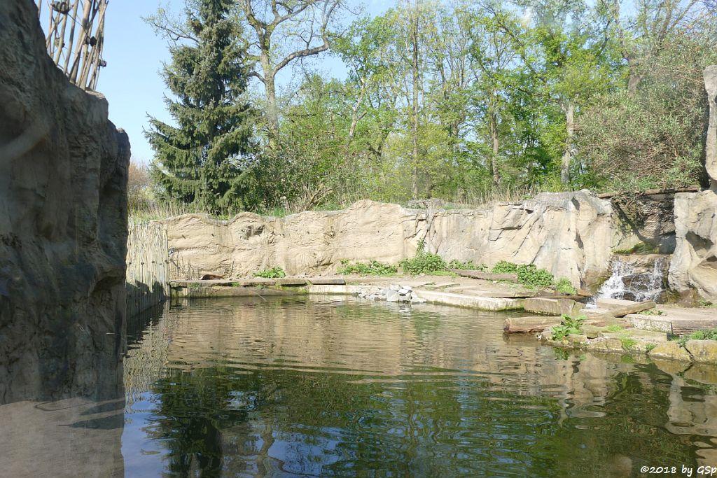 Nordamerikanischer Fischotter