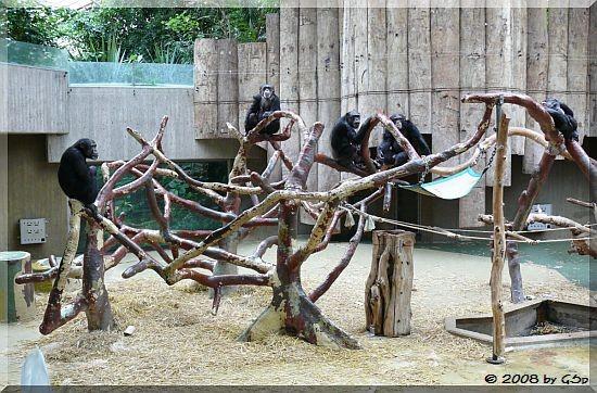 Schimpansenanlage
