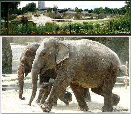 Elefantenpark 05.05.17 - 50 Fotos