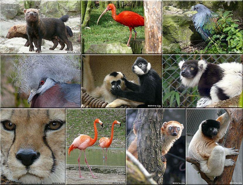 Rundgang 2 (mit Madagaskar-Lemurenhaus) - 110 Fotos