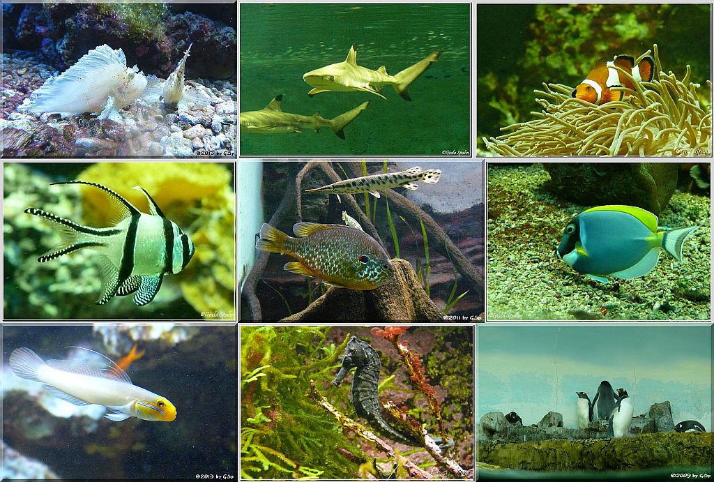 Exotarium Aquarienhalle - 170 Fotos