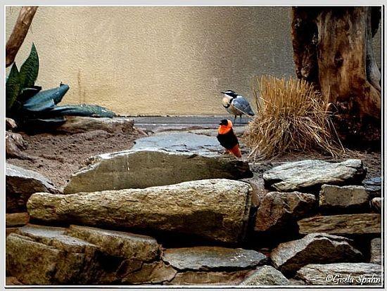 Krokodilwächter und Feuerweber