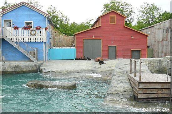 Nördlicher Seebär