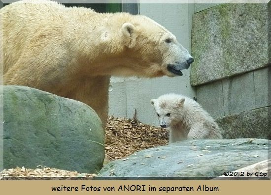 Eisbär ANORI (geb. am 4.4.12) mit Mama VILMA