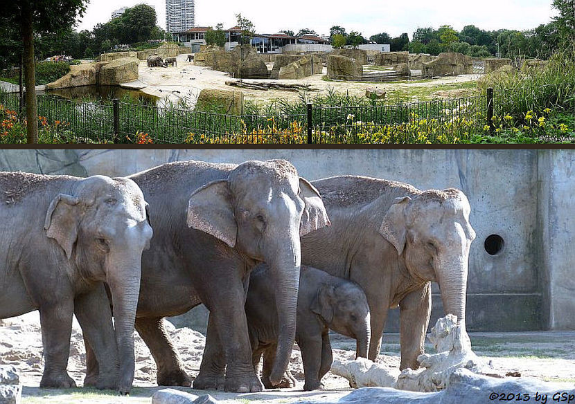Elefantenpark 31.10.13 - 45 Fotos