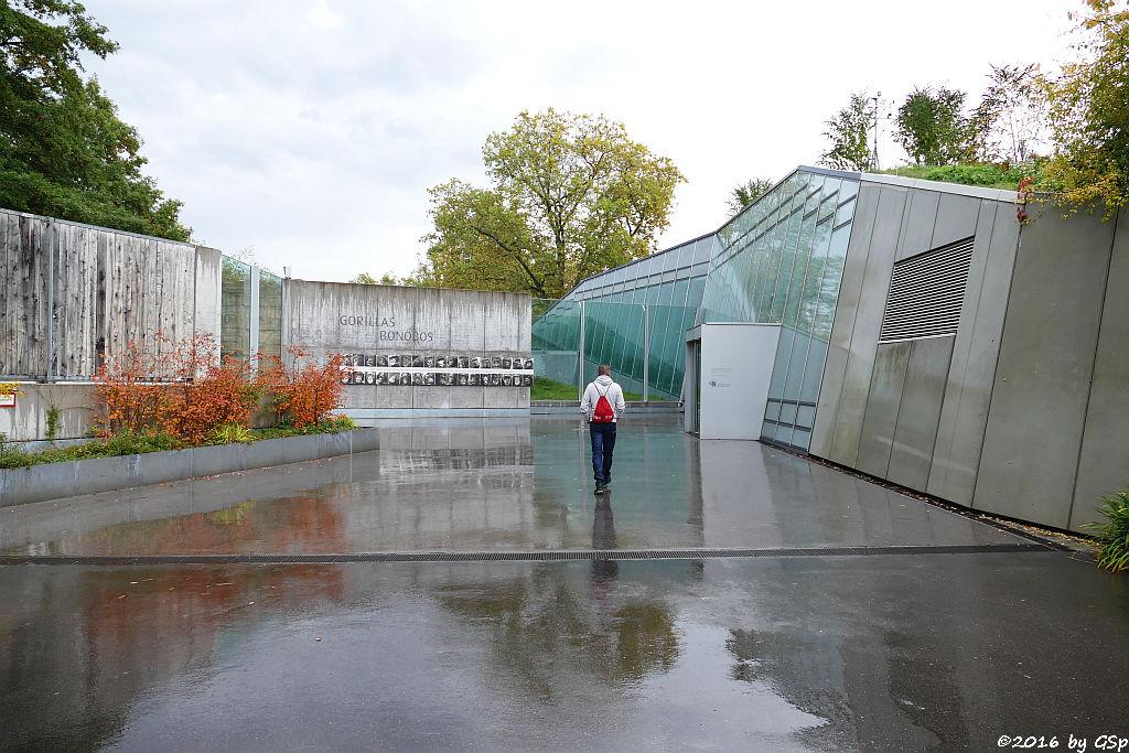 Neues Menschenaffenhaus für Gorillas und Bonobos - Fotos in sep. Galerie