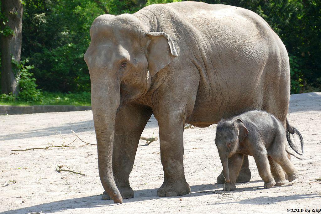 SHILA mit ihrem Sohn RAJ, geb. 5.5.18 (6 Tg.)