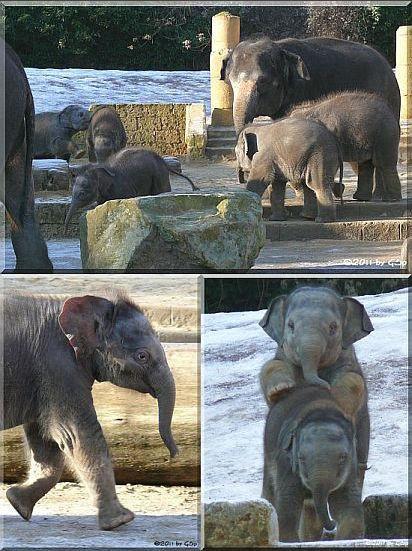 Elefantenkinder 11.01.11 - 80 Fotos