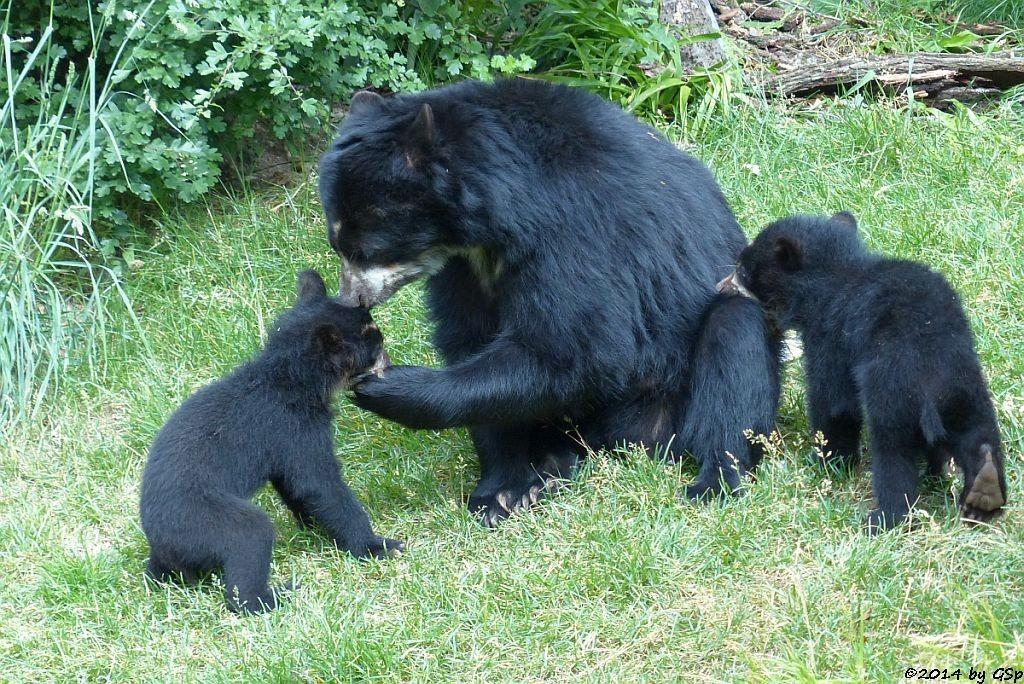CASHU mit ihren Söhnen TUPA und SONCO