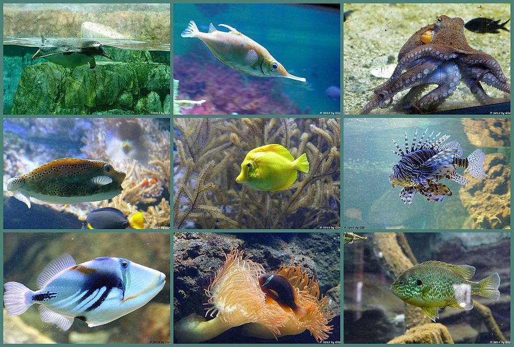 Exotarium - Aquarienhalle Teil 1 - 140 Fotos