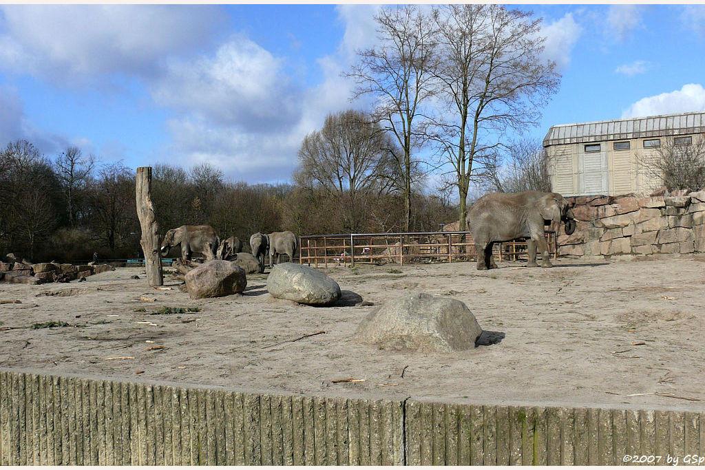 Afrikanische Elefanten - 65 Fotos
