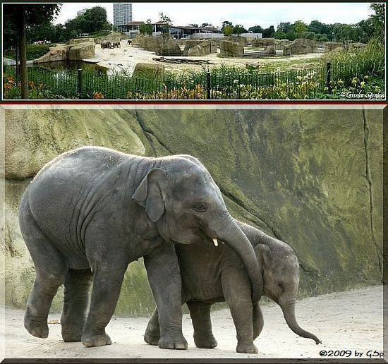 Elefantenpark 16.12.09 - 63 Fotos