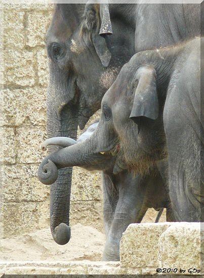 FARINA mit Sohn NUKA