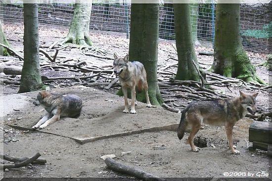 Wolfswald