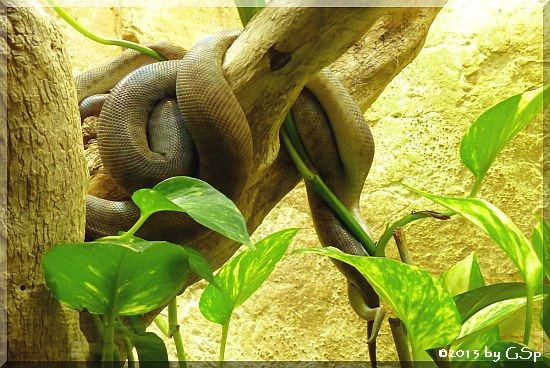 Stimson Python