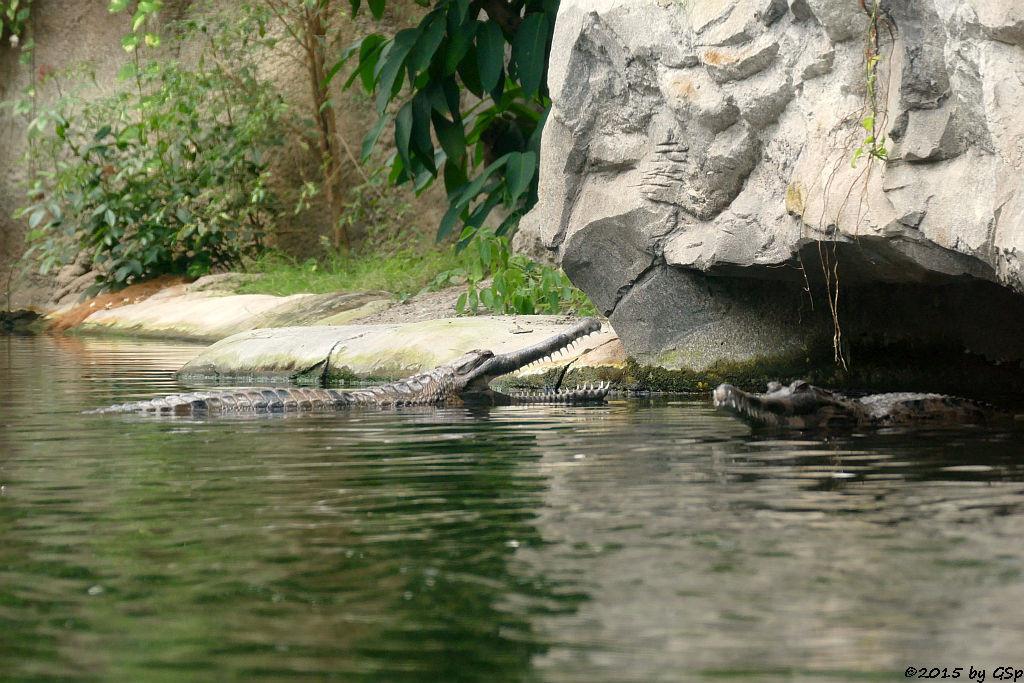Sunda-Gavial