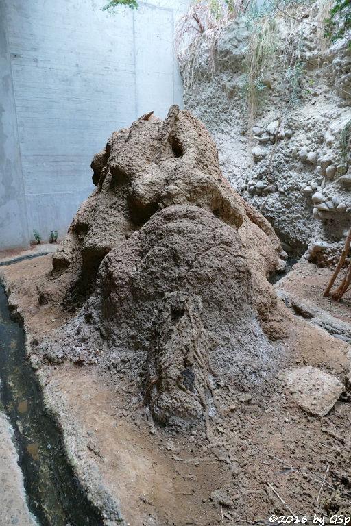 Riesentermite